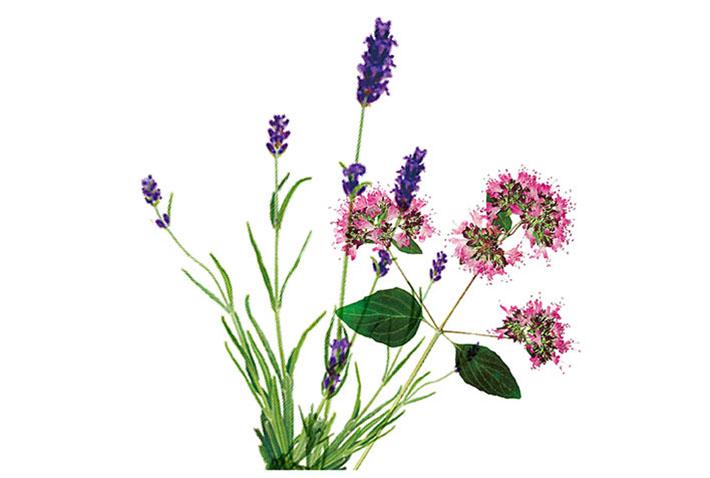 Floral Lavender タスカ アロマネイルオイル